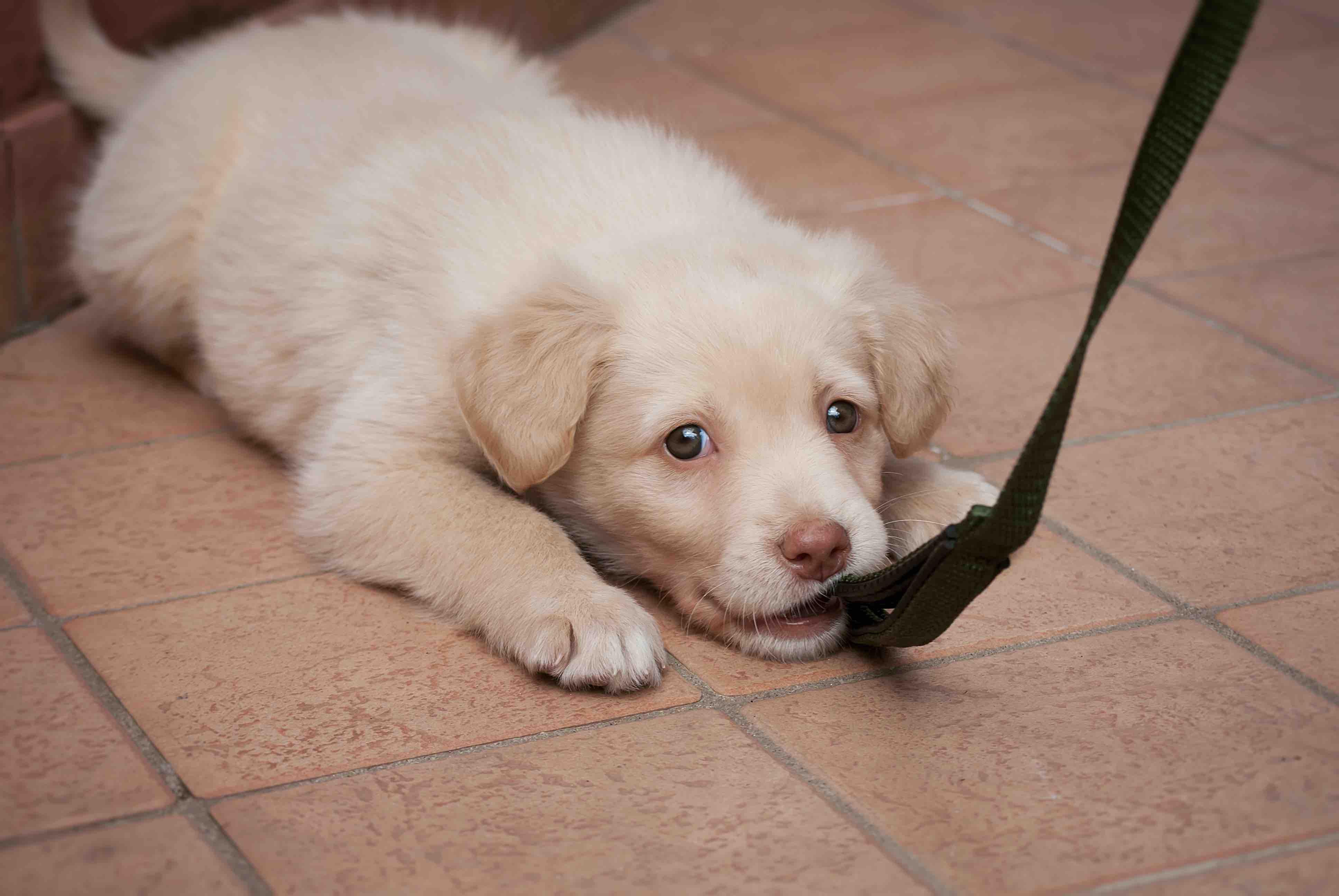 犬が甘えるときの10の仕草 甘える理由や犬の気持ち サインも