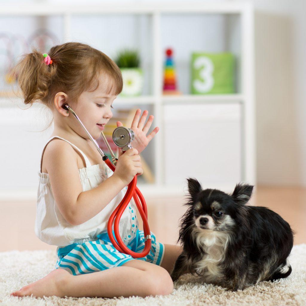 愛犬が下痢をしている時の原因と対処法5つ Zehitomo Journal