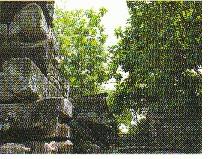 ロングステイ ミクロネシア連邦、高齢者にも懐かしい島々