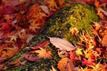 ~秋の養生法~
