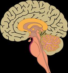 ストレスに強い脳を作る「扁桃体を鍛える方法」