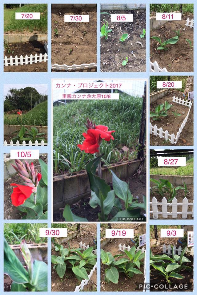 咲かせ合いの花「里親カンナ成長日記」