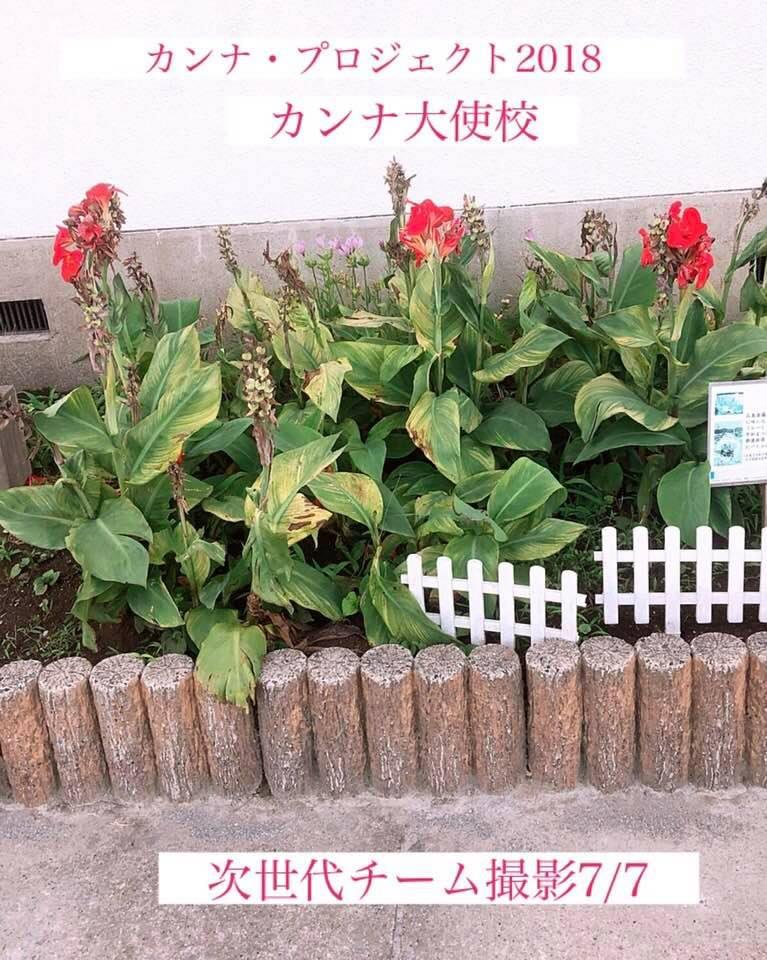 西日本での災害と真っ赤なカンナ