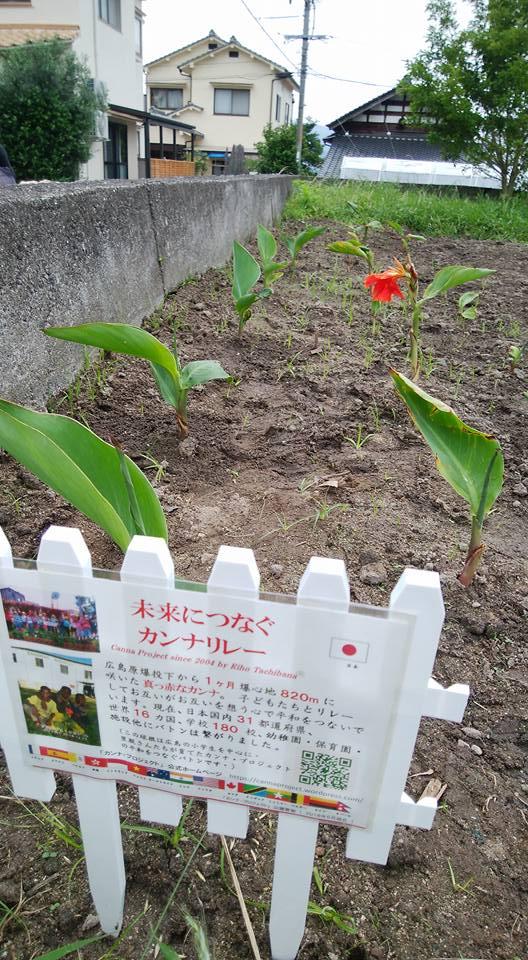 広島カンナ・P その後の里親植栽