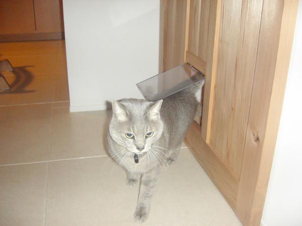 猫ドアでみんなハッピー
