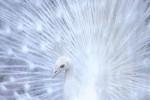 鳥好きにはタマらないとっても美しいエレガント動画♡