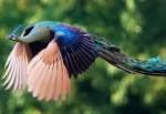 鳥好きにはタマらないとっても珍しい孔雀ファミリーの動画♡