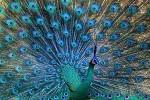 鳥好きにはタマらない秋の夜長にじっくり観たいアートな動画♡