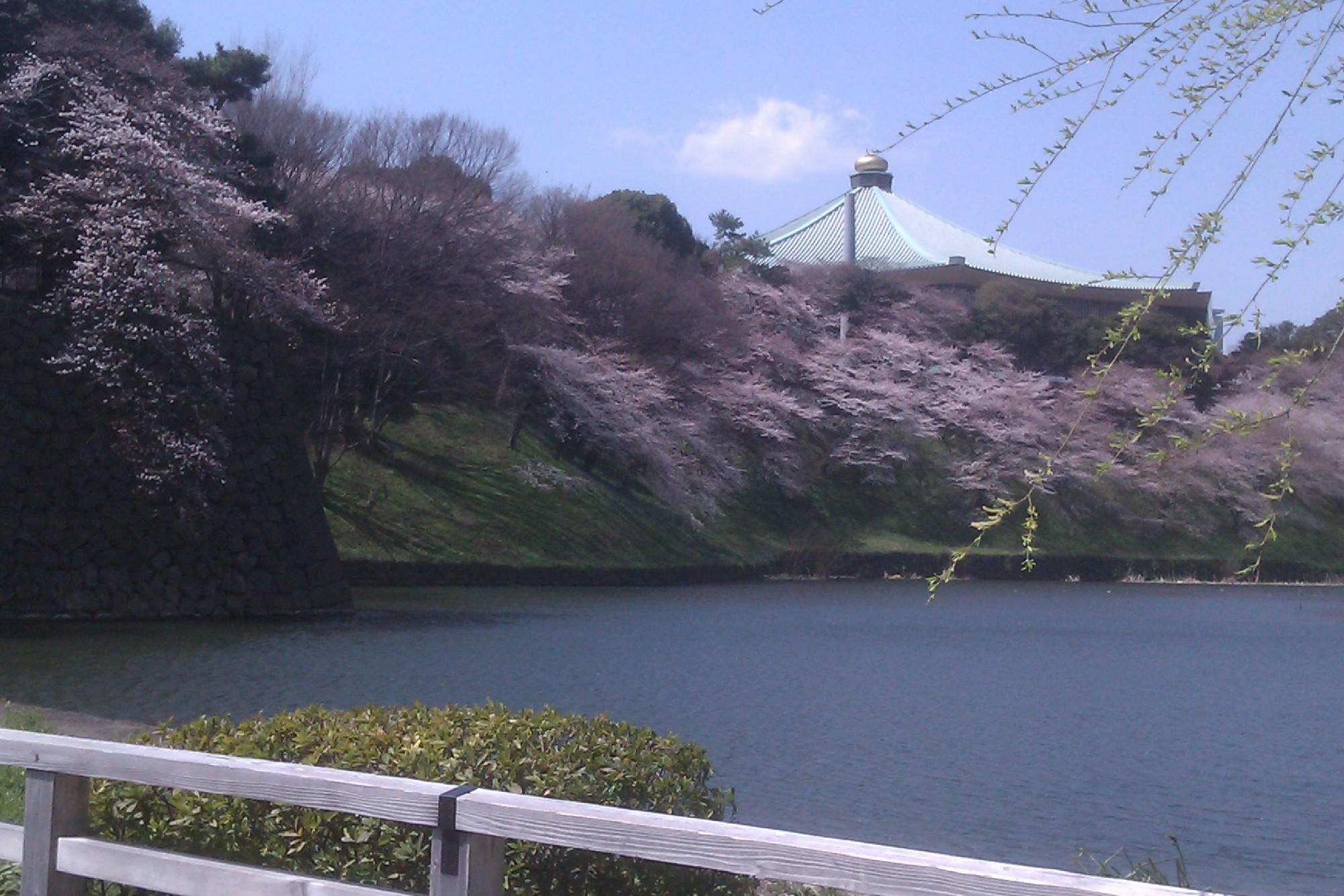 皇居お堀の桜