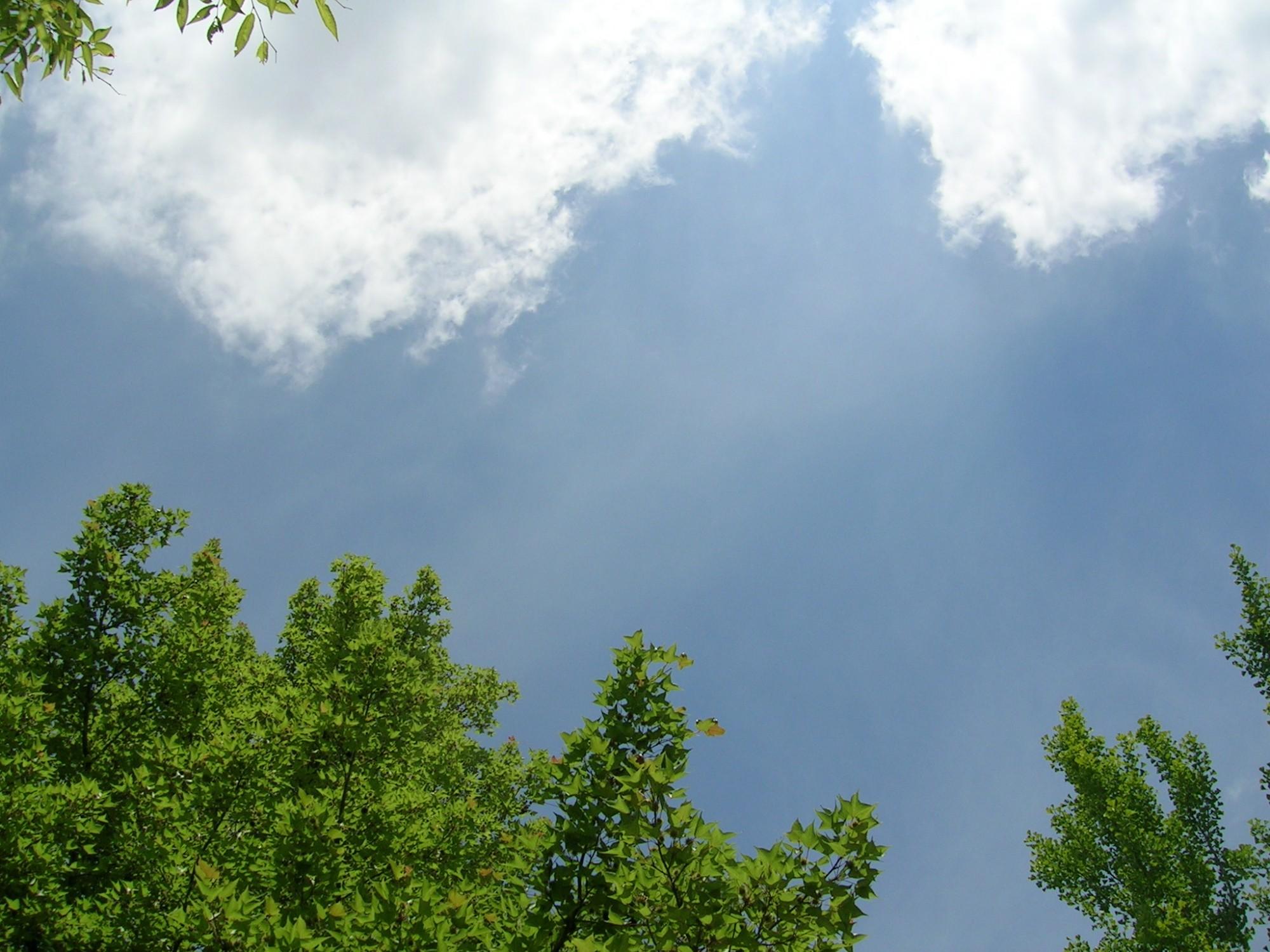 青空と木々が、動物たちの生きるための天からの恵み