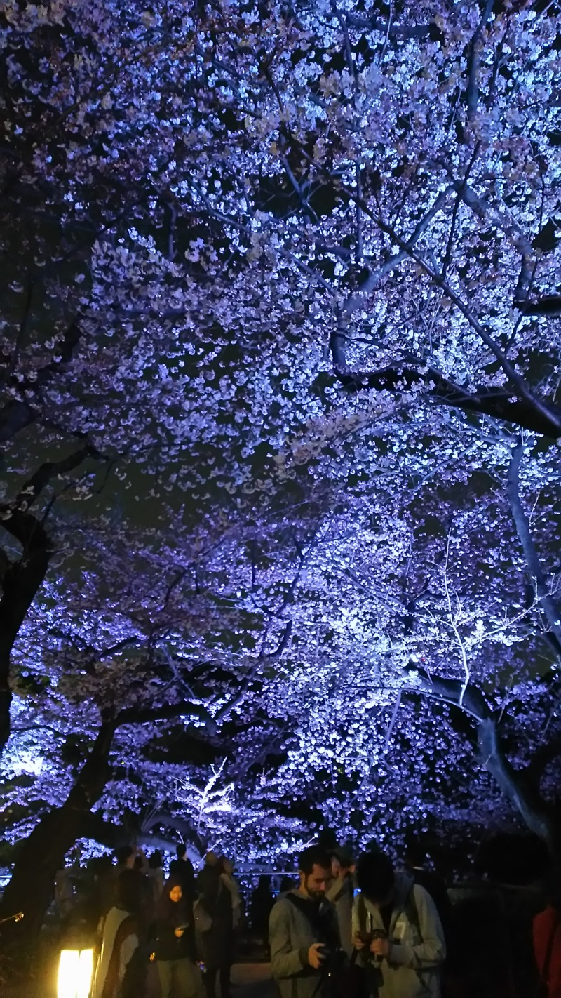 夜桜と会員ページ更新のお知らせ(*´ω`*)