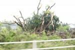 茨城県つくば市の竜巻被害6