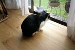 杉板の床と猫の暮し