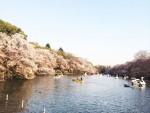 東京・吉祥寺 「井の頭公園の桜」
