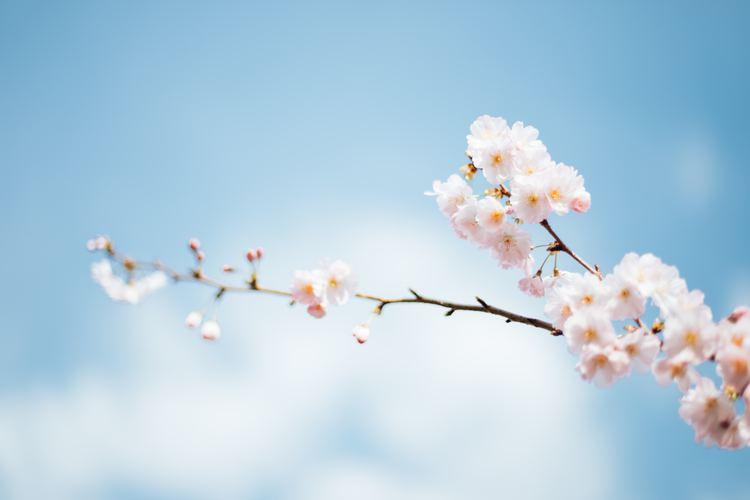もう春コスメ第2弾♡アディクションの「椿姫」