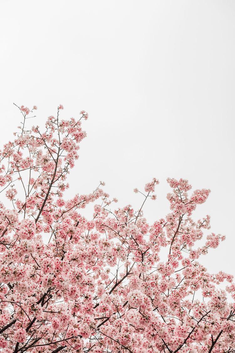 もう春コスメ第3弾♡セルヴォーク(Celvoke)の「春色」新提案♡