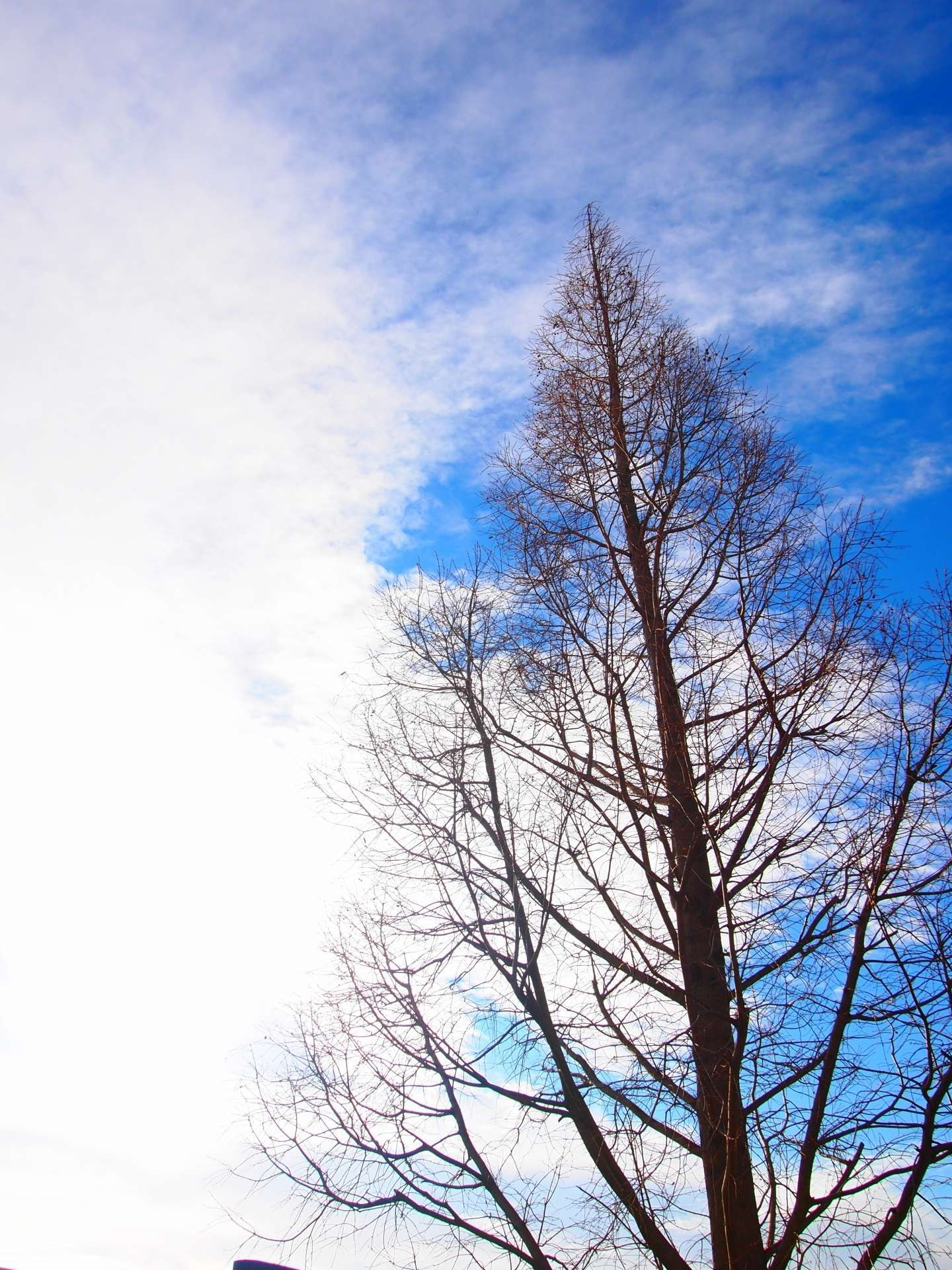 意味 木枯らし