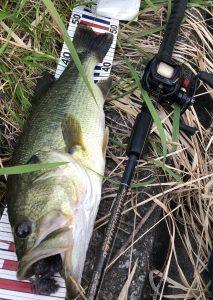 ベコンクロー、野池で釣れてます\(◎o◎)/!