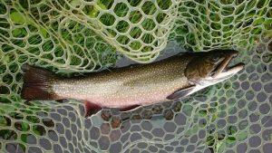 【TB山形店】お客様より蔵王フォレストスプリングスでの釣果報告を頂きました♪