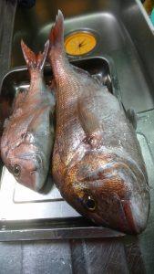 庄内沖での真鯛の釣果♪