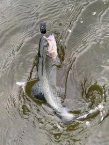 イチロー池も好釣!