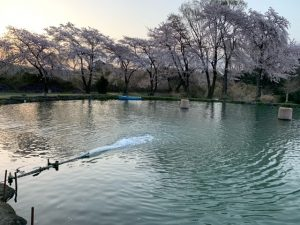 日の出と桜と街並みと・・・。