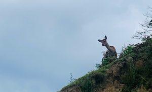 金華山のでかメバル