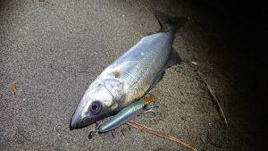 【釣果情報】新年初釣りは爆釣!?