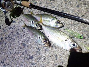 釣行レポート:糸島アジング