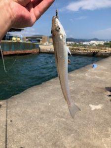 スタッフの海釣、釣果情報。