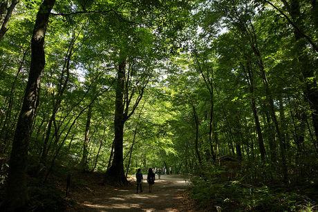 緑が濃い林の山道