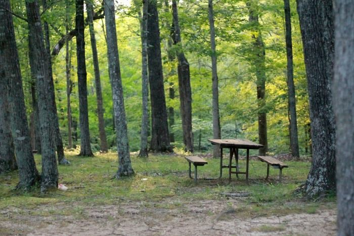 森の中にあるベンチとテーブルの写真