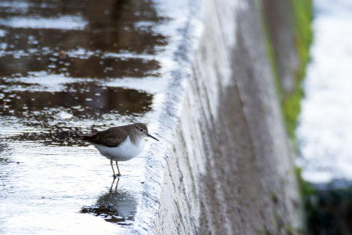 水で濡れた岩の上に鳥が止まっている写真