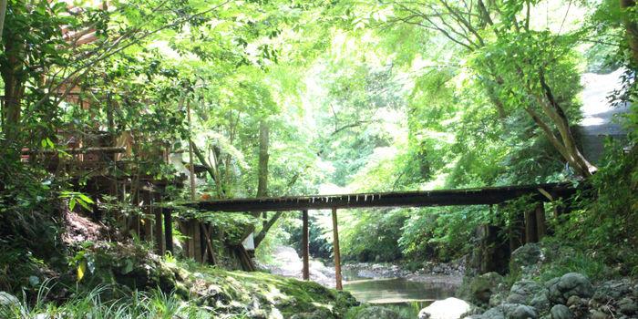 深澤渓自然人村の綺麗な緑の写真
