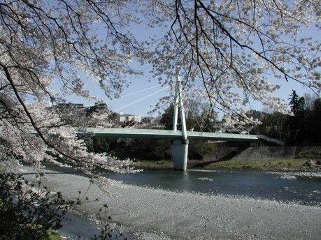 桜が咲いている川