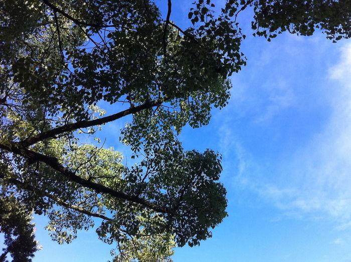 綺麗な青空と木の写真
