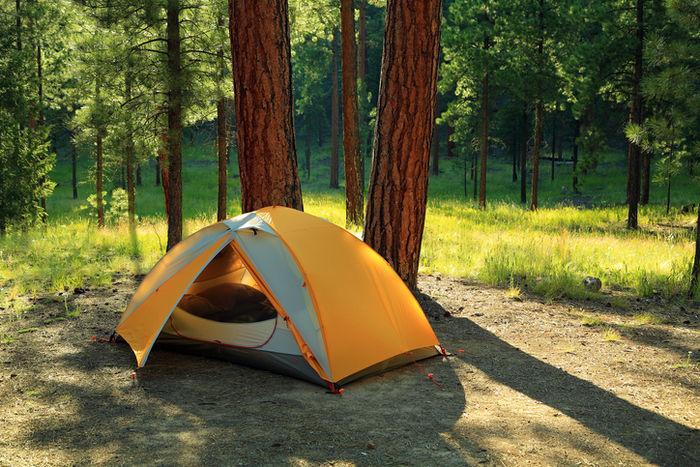 木の側に貼ってあるテントの写真