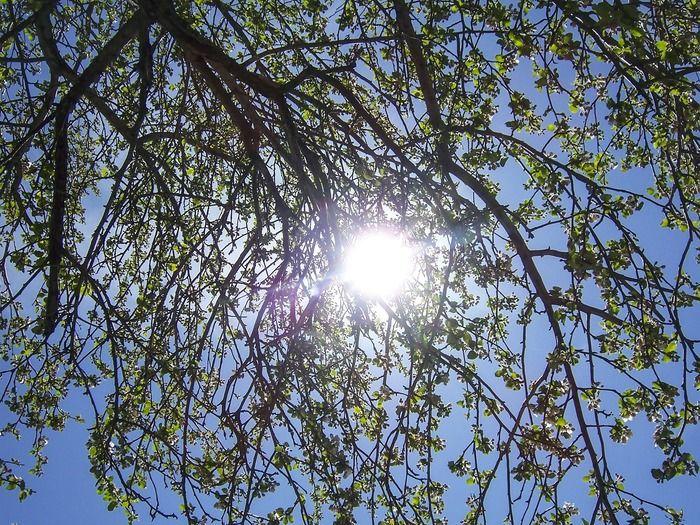 木の枝から透けて見える太陽の写真