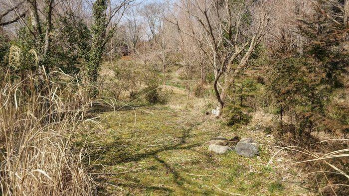 ソロテントサイトの芝生