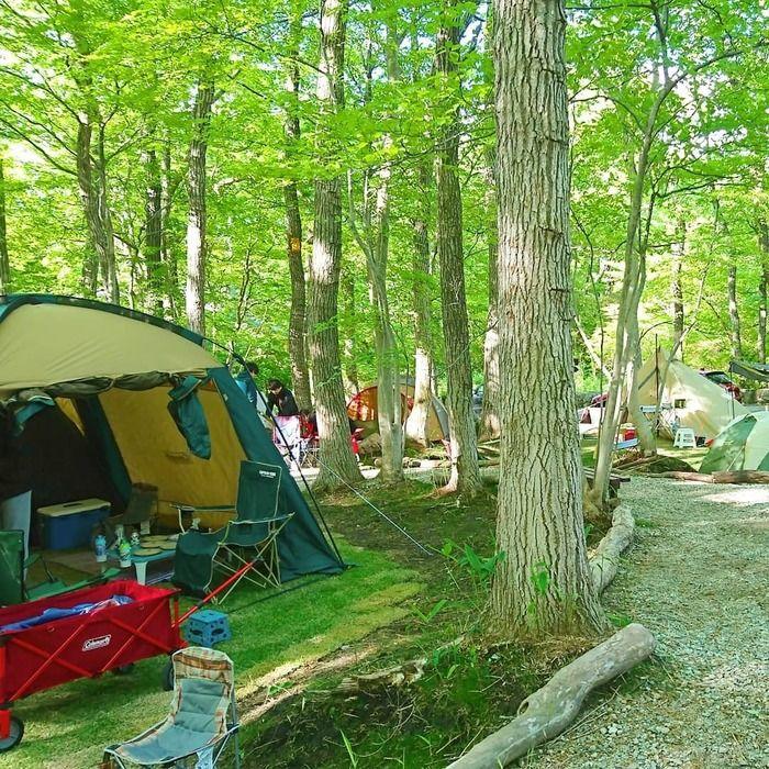 ぽんぽこの森ファミリーキャンプ場のテントサイトの写真