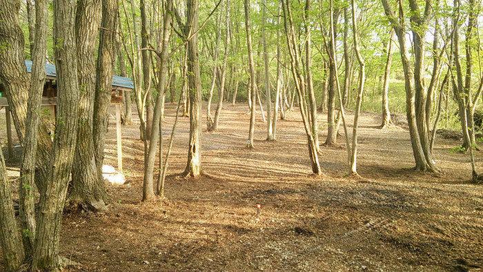 長南寺パークキャンプ場のキャンプサイトの写真