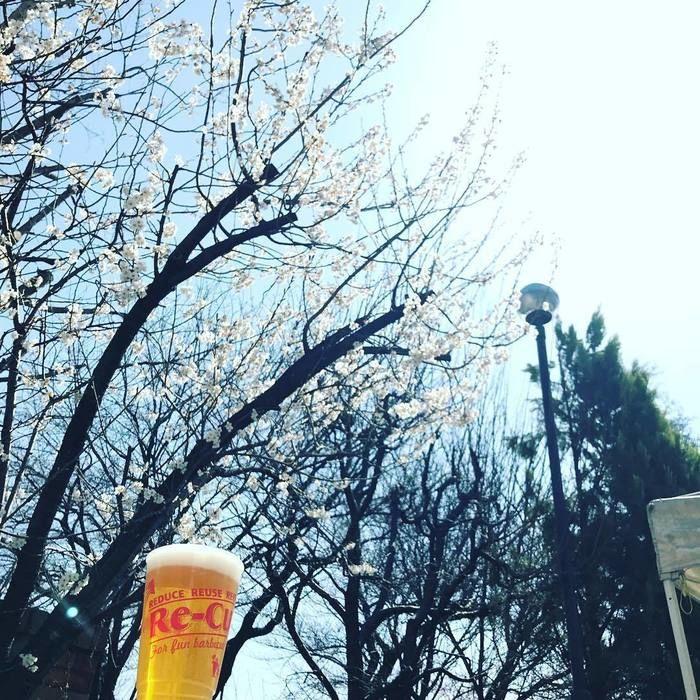 桜の木の下に置いてあるビールの写真