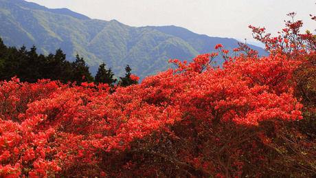 紅葉が綺麗な山の写真