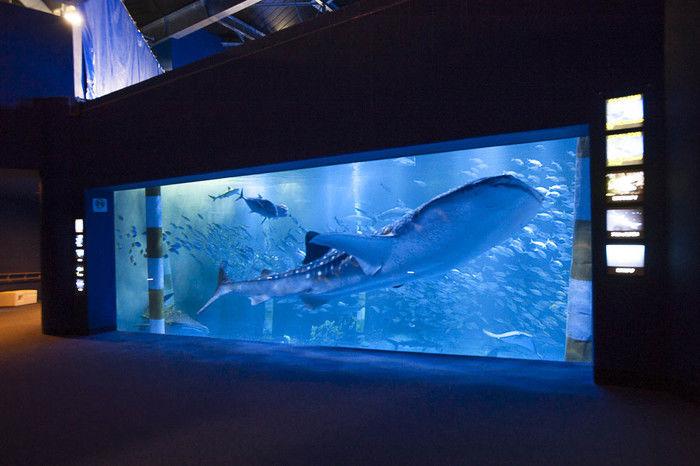 のとじま水族館のジンベイザメの写真