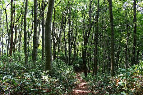 緑が綺麗な林