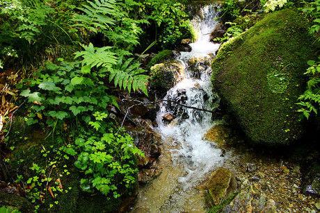 山の中に流れる湧き水