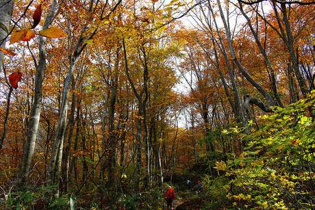紅葉した林の中の道