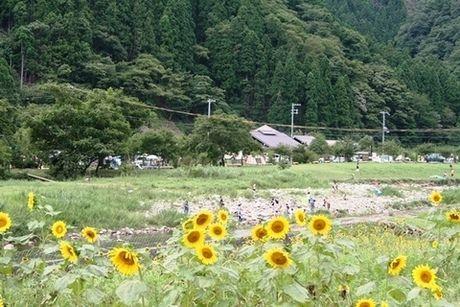 南光自然観察村のひまわりの写真