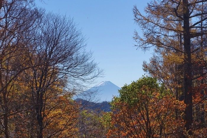 紅葉している木々の間から見える山の写真
