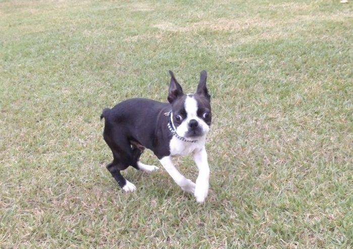 芝生の広場で遊んでいる犬の写真